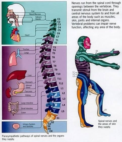 Pinched nerve in neck symptoms